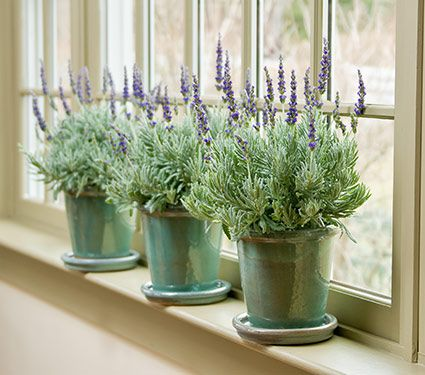 Holiday gifts from white flower farm that never fail to please lavendar goodwin creek grey 54 mightylinksfo